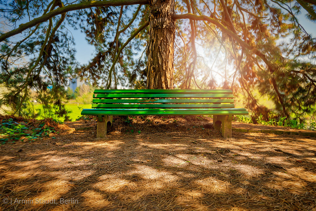 HDR shot of a bench under a huge pine tree